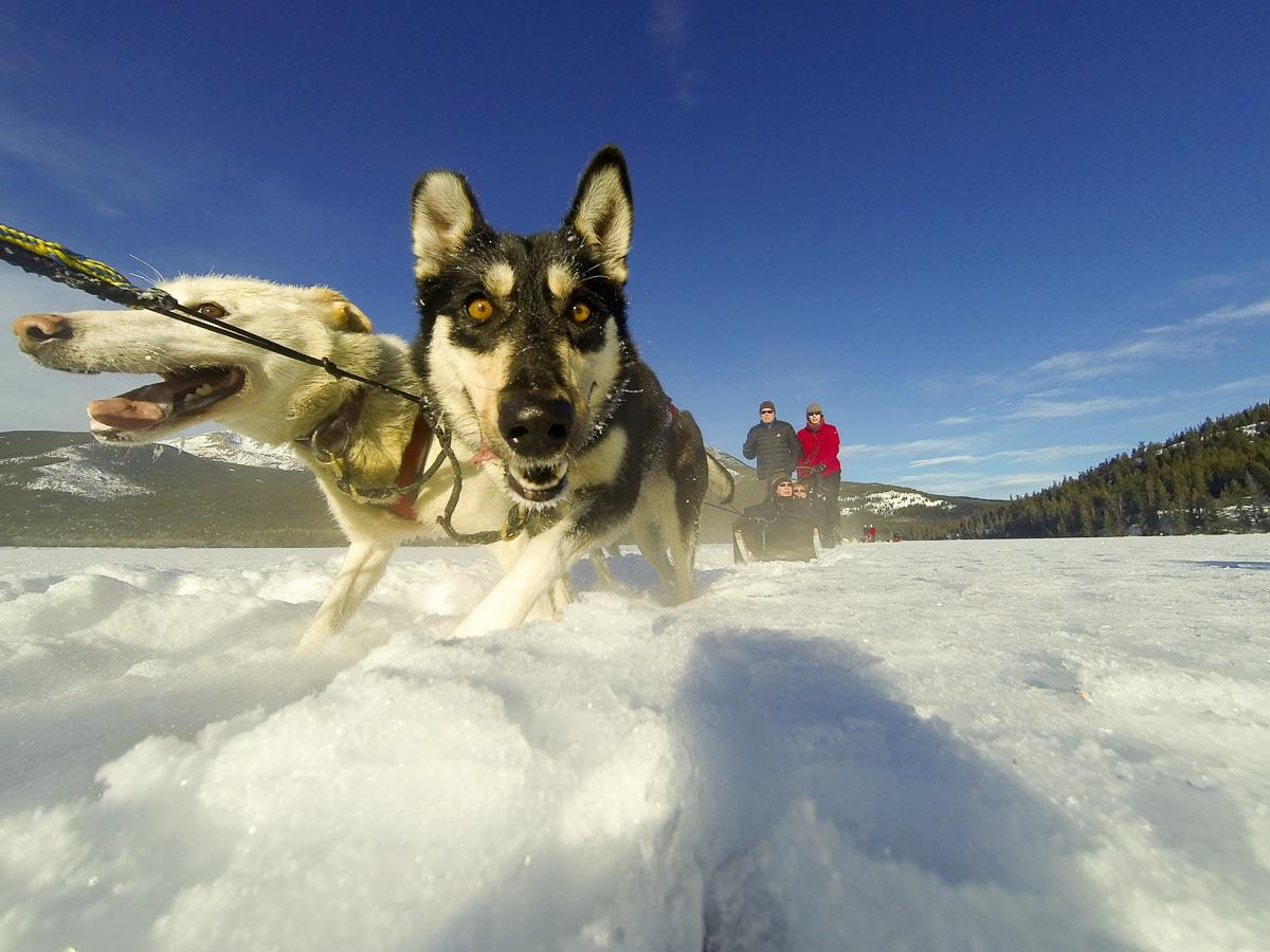 Brendansadventures.com Critique: Dog Sledding on Pyramid Lake