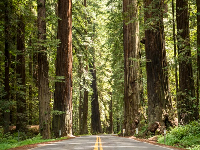 California Redwoods and a long-overdue westcoast roadtrip.