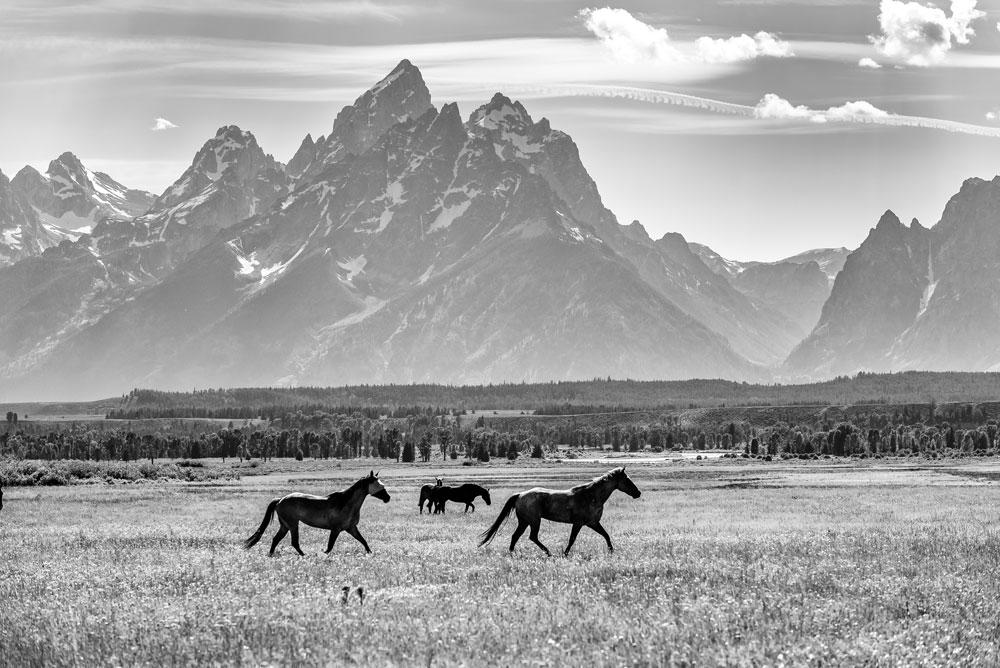 Horse beneath the grand teton mountains