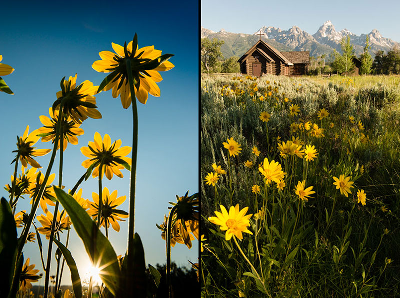Wild flowers in front of the chapel of the transfiguration in Grand Teton National Park