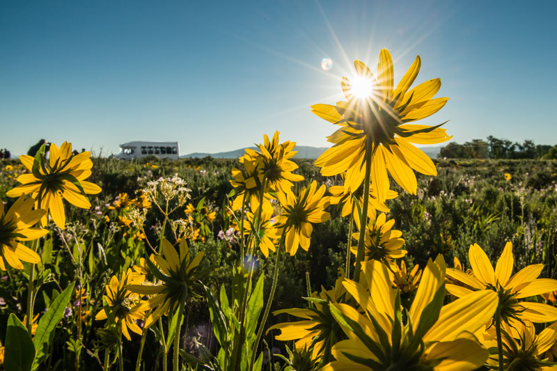 Wildflowers put into a strange perspective when juxtaposed against a tour bus.