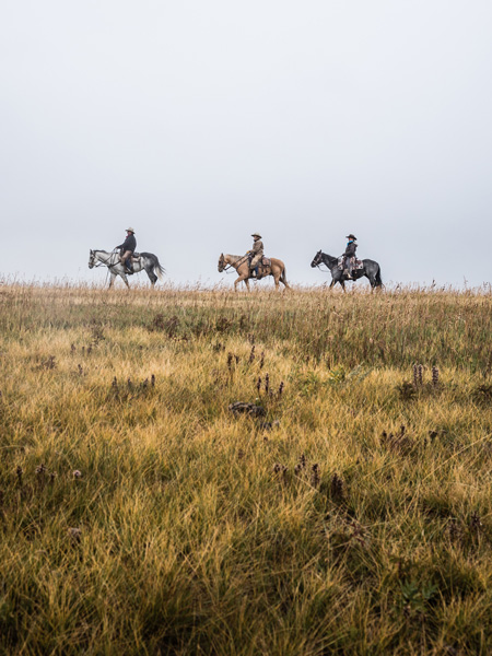 Three horses cross the prairies on a cold travel alberta autumn day.