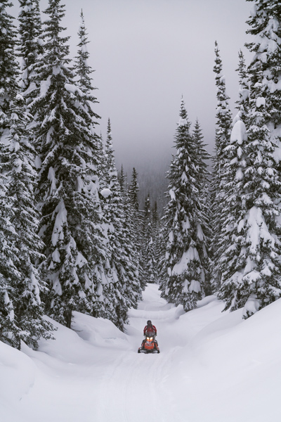 Snowmobiling amid snow covered pine trees in the backcountry behind whitefish mountain resort during a winter adventure in Kalispell montana