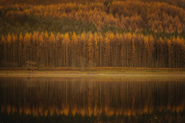 The Scottish Highlands are dramatic, no matter the season. Colours transform throughout the year, but in the autumn, they're especially dramatic with orange Larch trees. In this scene, orange large trees and green pines create multiple layers, reflected in Loch Ness